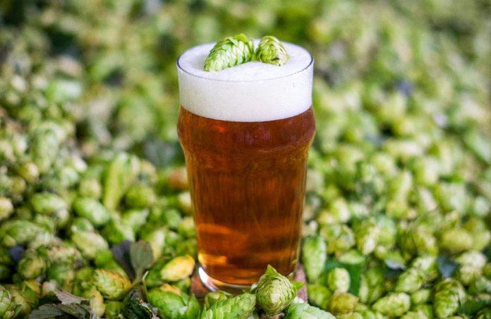 Cerveza lúpulos andinos